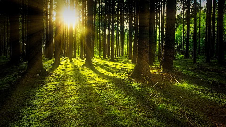 Ihanat metsät ovat todellisia aarteita!
