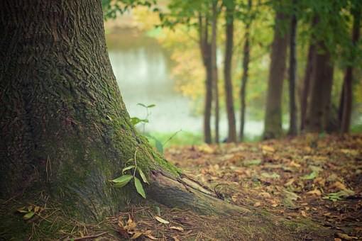 Metsällä on palauttava ja stressiä poistava terapeuttinen vaikutus.