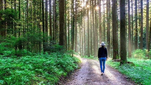 Metsän terveysvaikutuksista metsäterapia on tunnetuin